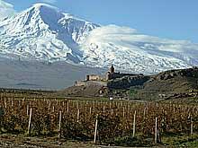 Виноград и Арарат
