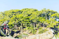 сосновые и кедровые леса Ликийской тропы